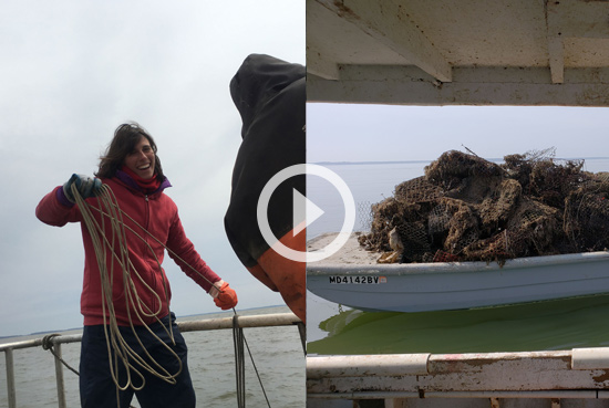 Customer Service Experience - Customer Service Experience - MDOT SHA and the Oyster Recovery Partnership Join to Help Restore the Chesapeake Bay Ecosystem